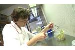 Lečivé látky v chmelu Přesazování rostlinek v flowboxu