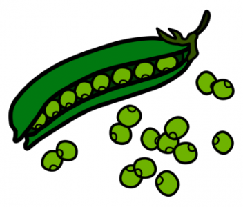 "Czech scientists helped to ""read"" the genome of pea"